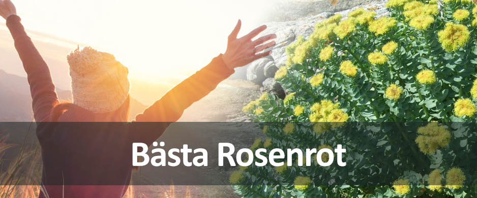 bästa rosenrot preparatet
