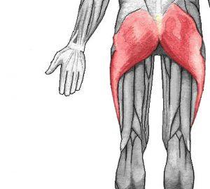 stora muskelgrupper