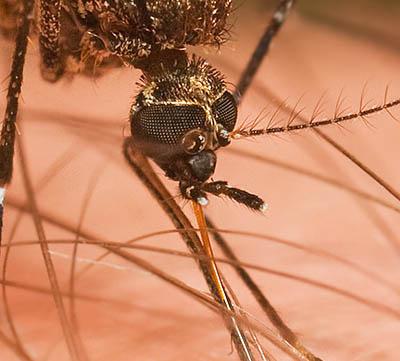 Myggfångare för mygg och knott