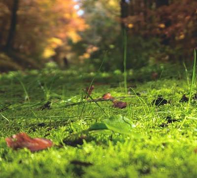 Få bort mossa från gräsmattan