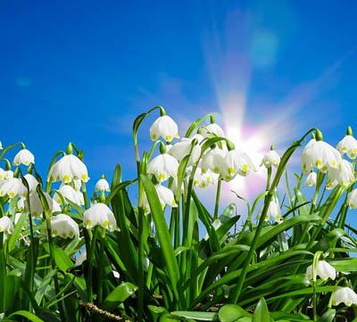starta vertikalskäraren på våren